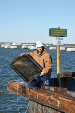 Bobby Carlow inspects a tray for oysters at Lamberts Point. NS now uses submerged cages to raise the baby spat along the waterfront near Pier 6.