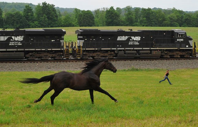 An Ns Carman And Her Thoroughbred Of Transportation